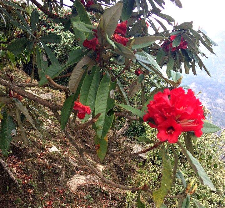 2017_Annapurna_02_3